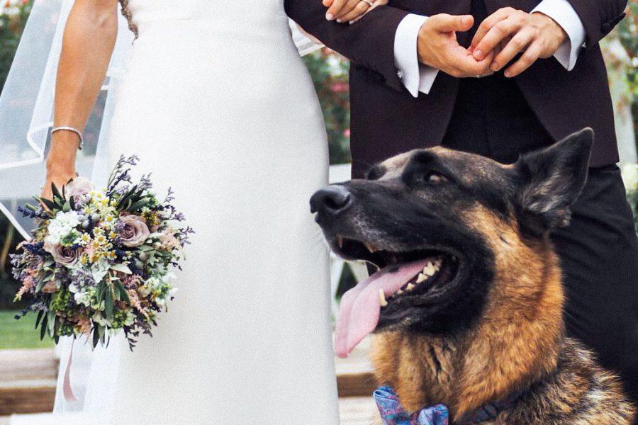 Boda ¡Guau! Tu perro, un invitado más de tu boda