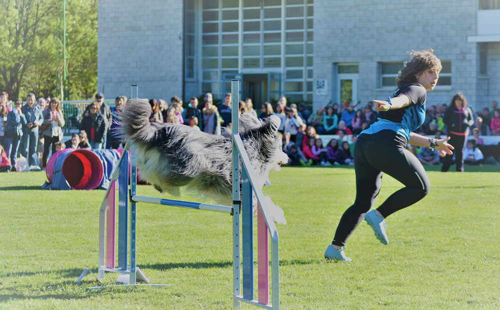 Curso agility junior fines de semana / 19 de octubre