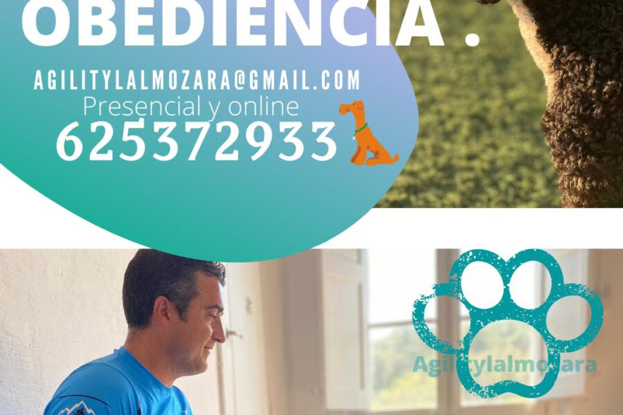 Curso obediencia / 11 de junio